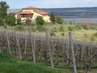 Prince Stirbey vines and winery