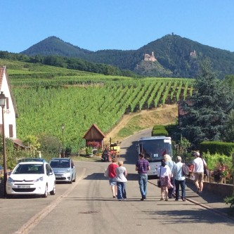 Walking in Grand Cru Rosacker